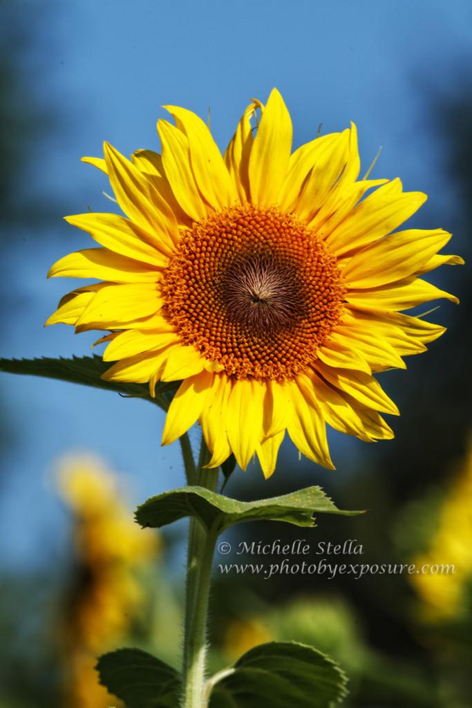 Scenic, Nature & Fine Art Landscape photography